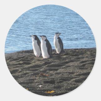 Three curious penguins classic round sticker