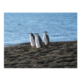 Three curious penguins postcard