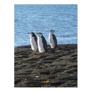 Three curious penguins postcard
