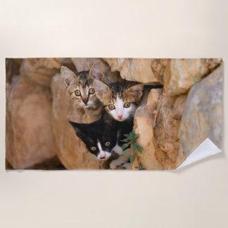 Three Cute Curious Cat Kittens Faces Funny Photo , Beach Towel