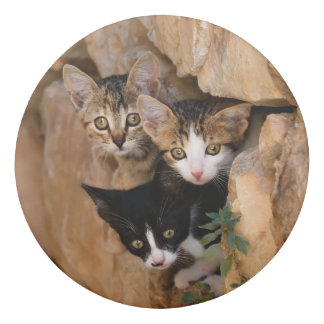 Three Cute Curious Cat Kittens Faces Funny Photo ; Eraser