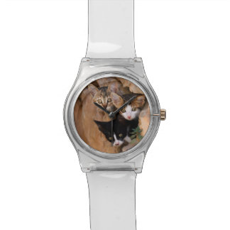 Three Cute Curious Cat Kittens Funny Photo - women Watch