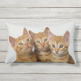 Three Cute Ginger Cat Kittens Friends Head Photo - Outdoor Pillow
