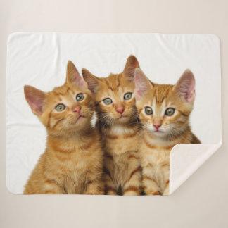 Three Cute Ginger Cat Kittens Friends Head Photo - Sherpa Blanket