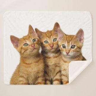 Three Cute Ginger Cat Kittens Friends Head Photo * Sherpa Blanket