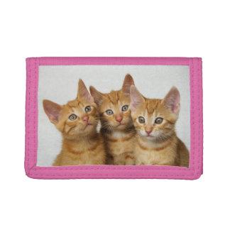 Three Cute Ginger Cat Kittens Friends Head Photo - Tri-fold Wallets