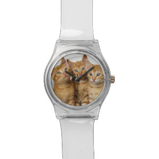 Three Cute Ginger Cat Kittens Together - women Wrist Watch