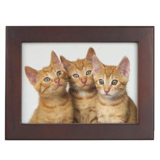 Three cute ginger kittens side by side keepsake box