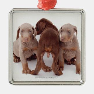 Three Doberman pinscher puppies Silver-Colored Square Ornament