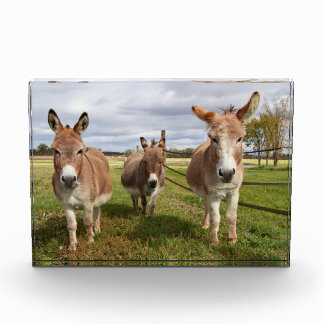 Three Donkey's
