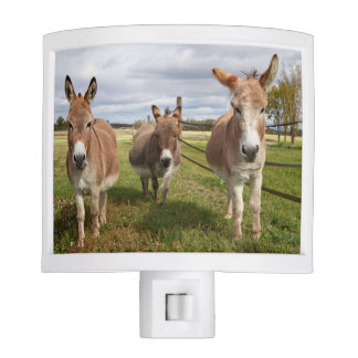 Three Donkey's Night Light