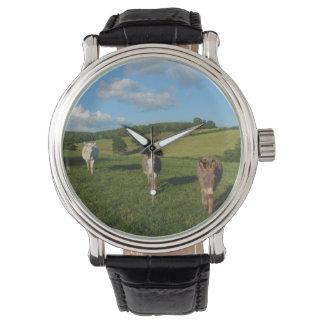 Three Donkeys in a Field Watch