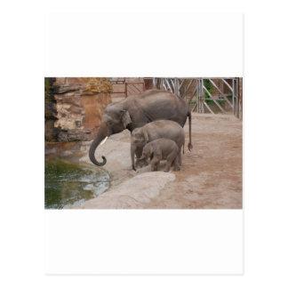 Three Elephants Postcard