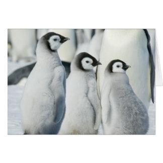 Three Emperor Penguin Chicks - note card