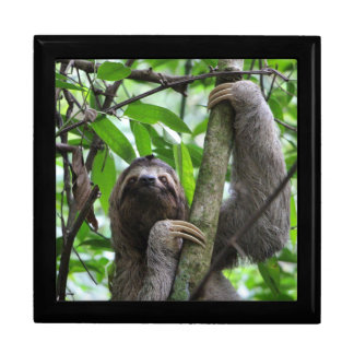 Three finger sloth gift box