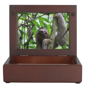 Three finger sloth keepsake box