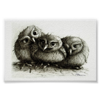Three Funny Young Owls Poster