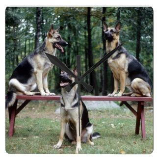 Three German Shepherds posing wall clock