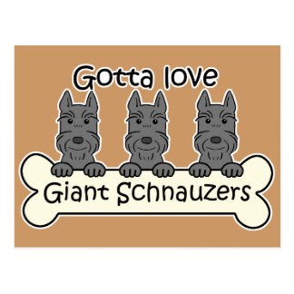 Three Giant Schnauzers Post Card