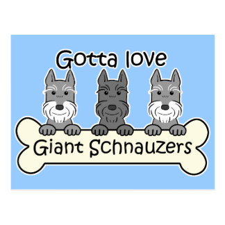 Three Giant Schnauzers Postcard
