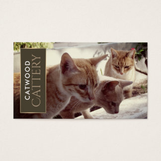 Three Ginger Kittens, Cattery Business Card