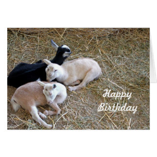 Three Goats 7889 Birthday Cards