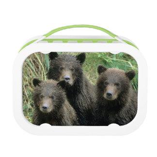 Three Grizzly Bear Cubs or Coys (Cub of the Lunch Box