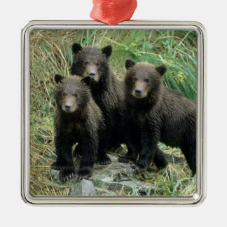 Three Grizzly Bear Cubs or Coys (Cub of the Metal Ornament