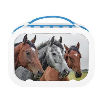 Three Horses Lunch Box