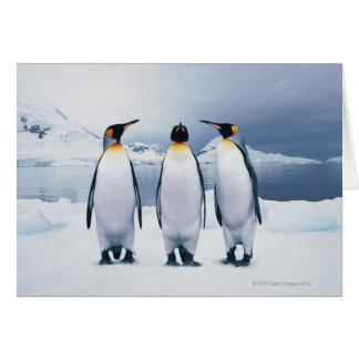 Three King Penguins Card