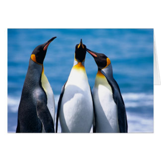 Three King Penguins - note card