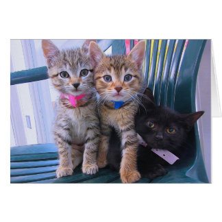 Three Kittens Card