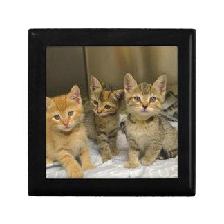 Three Kittens Gift Box