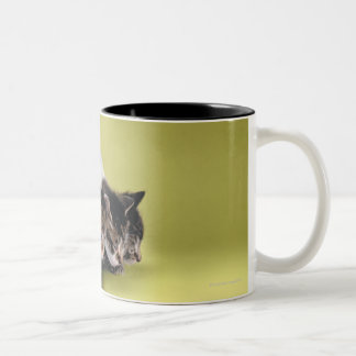Three kittens hugging each other Two-Tone coffee mug