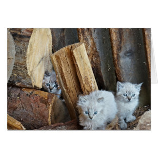 Three kittens in the woodshed card