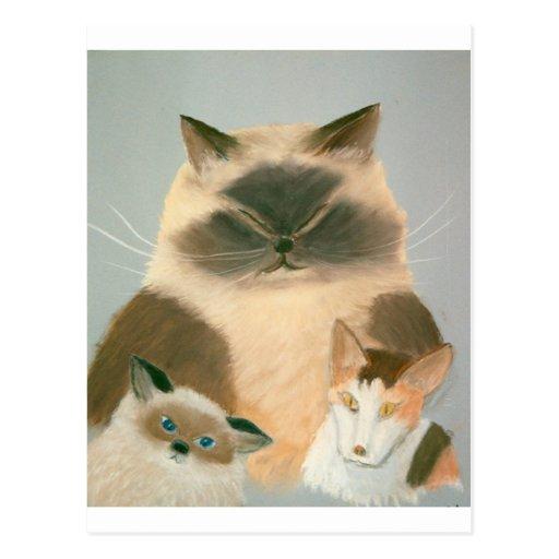 Three Kool Kats Postcard