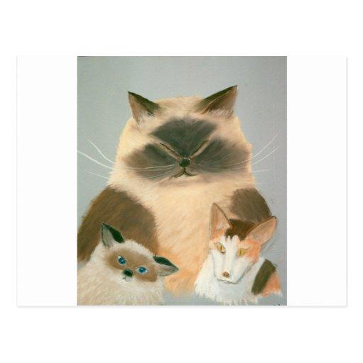 Three Kool Kats Post Card