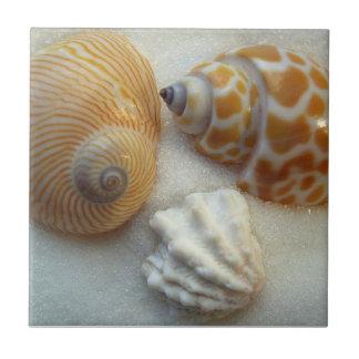 Three Little Beach Shells Ceramic Tile