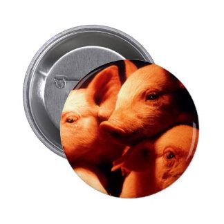 Three Little Pigs 2 Inch Round Button