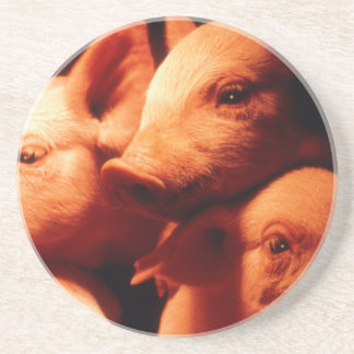 Three Little Pigs Coaster
