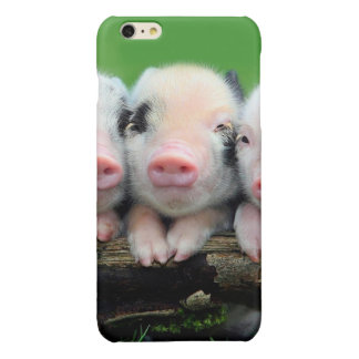 Three little pigs - cute pig - three pigs