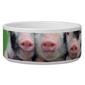 Three little pigs - cute pig - three pigs