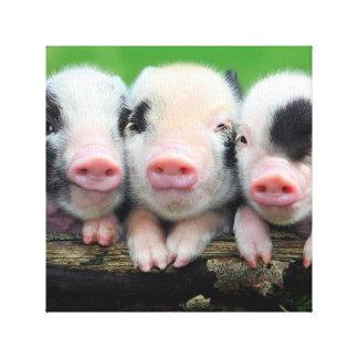 Three little pigs - cute pig - three pigs canvas print