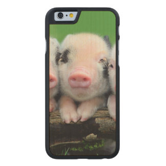 Three little pigs - cute pig - three pigs carved maple iPhone 6 case