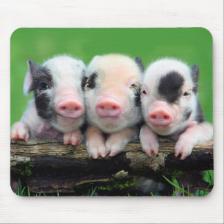 Three little pigs - cute pig - three pigs mouse pad