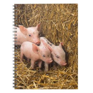 Three Little Pigs Notebooks