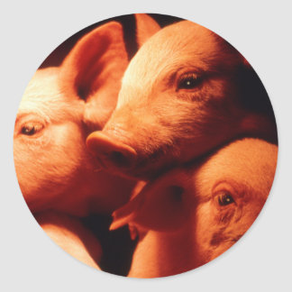 Three Little Pigs Round Sticker