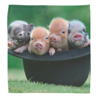 Three little pigs - three pigs - pig hat bandana