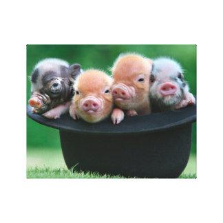 Three little pigs - three pigs - pig hat canvas print