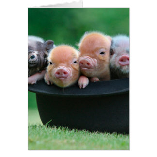 Three little pigs - three pigs - pig hat card
